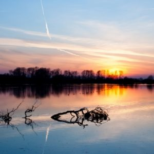 lake_branches_water_evening_sky_46166_602x339